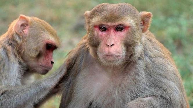 China reportó la primera muerte de un humano por un raro virus transmitido por monos