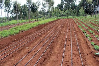 Best Drip irrigation company in Kenya