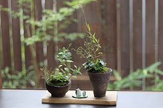 丸いヒビ模様の斜めの鉢とコップ型のヒビ模様の鉢に入った山野草盆栽ふたつとカエルの置物