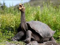 9 Hewan Langka yang Hanya Hidup di Kepulauan Galapagos