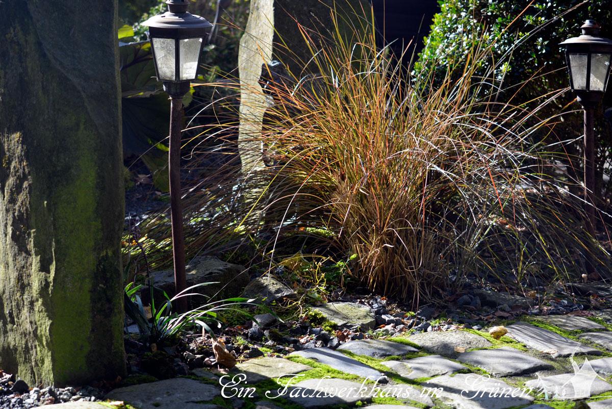 Carex comans Bronze Farm