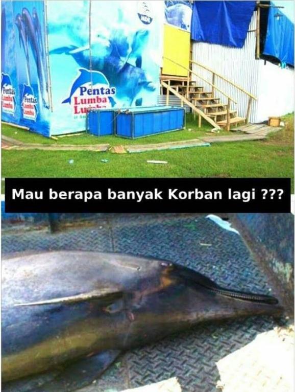 Hal yang Mengerikan dibalik sirkus lumba-lumba