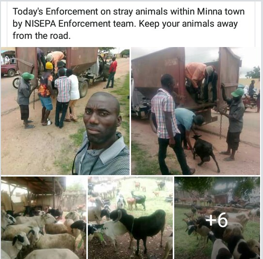 Photos: Niger State Environmental Protection Agency arrest 159 animals for straying and constituting nuisance in Minna