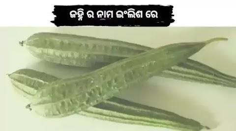 Janhi in English || Odia Janhi Name in English