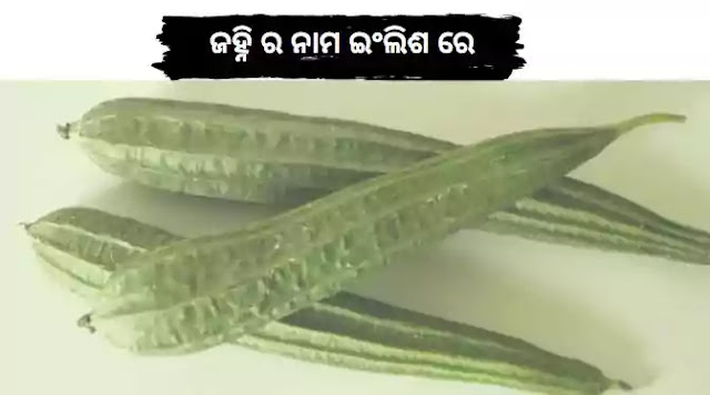 Odia Janhi Name in English