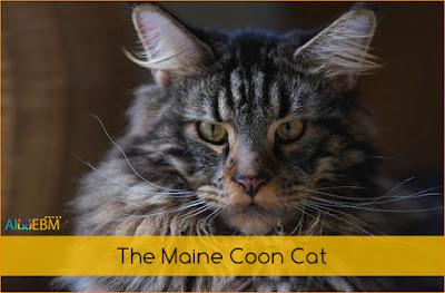 Persian cat, Beautiful cats, beautiful cat, Cats breeds,