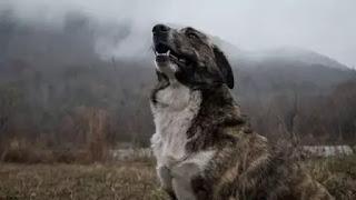 रात में कुत्ते क्यों रोते हैं ?