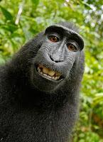 Selfie von seltsamen sprechenden Tieren