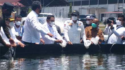 Komite II DPD RI Tinjau Tambak Udang Vaname di Aceh Timur