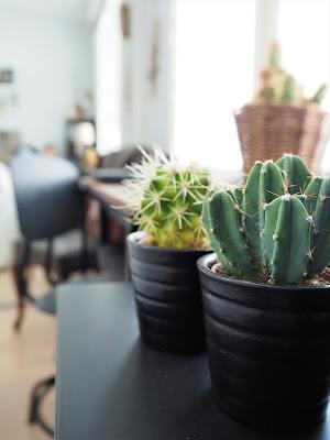 kaktus, pikku kaktukset