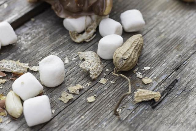 Marshmallows, Erdnüsse und Schokolade - Dreamteam