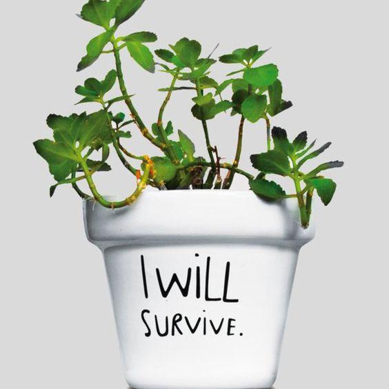 https://es.pinterest.com/nualan/a-mi-hermana-se-le-mueren-las-plantas/