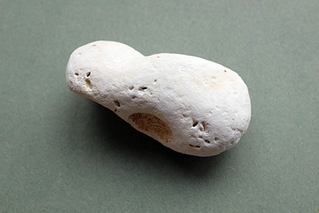 Chalk Pebble © Graeme Walker / The Pebble Museum 2019