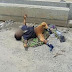 Mutilated body of a child under 3 years left for Abuja with his missing pen1s