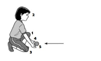 Tehnik Dasar Menangkap Bola Kasti