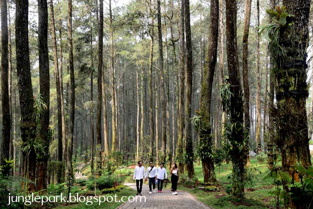 Orchid Forest Lembang, Tempat Outbound di Lembang Bandung, EO Outbound Lembang, Paket Outbound di Bandung