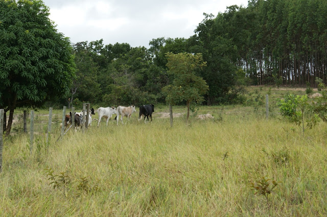 foto Fazenda em uberlândia