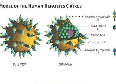 Các chủng viêm gan siêu vi trùng