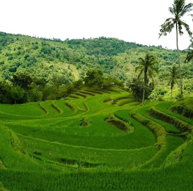 Keindahan Terasering Desa Marejen Lombok