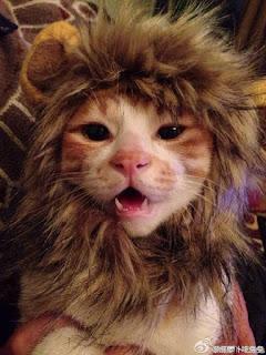 foto kucing lucu imut