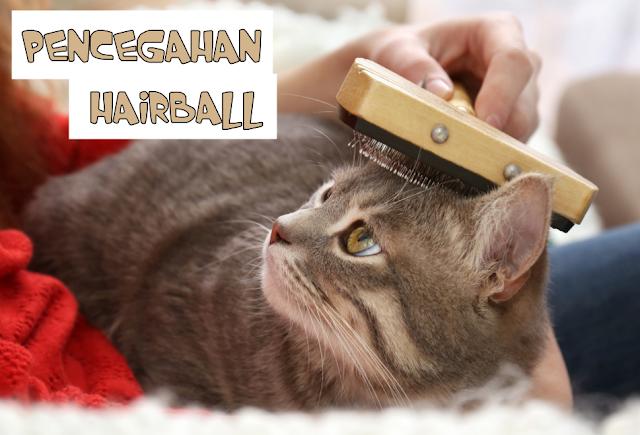 Pencegahan Hairball Kucing