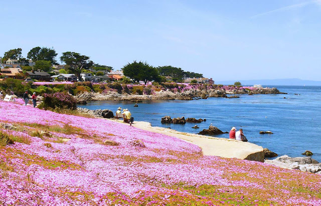 A beach with purple flowers in the foreground
