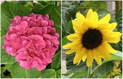Blumen: rot, gelb