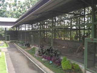 kandang unggas nirwana stable