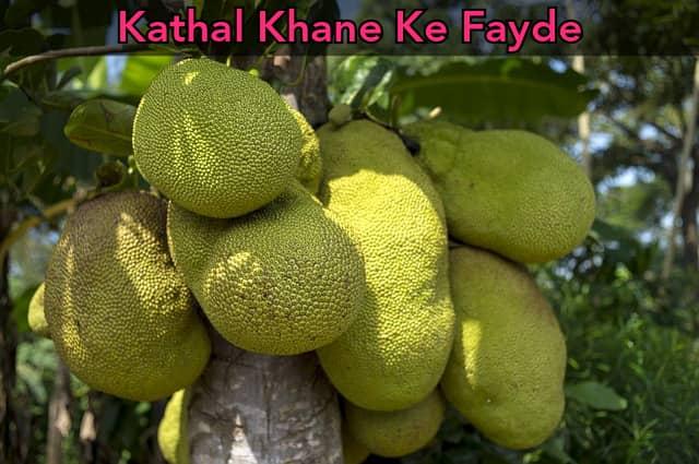 Kathal Khane Ke Fayde in Hindi   Jackfruit Benefits in Hindi