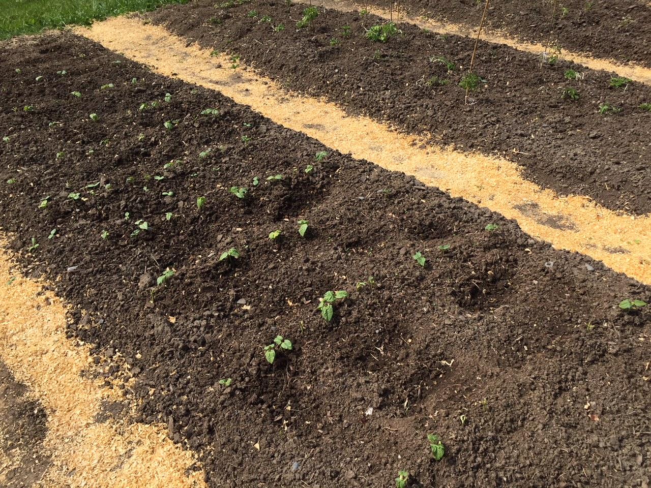 Deep Bed Gardening - Victory Garden Style
