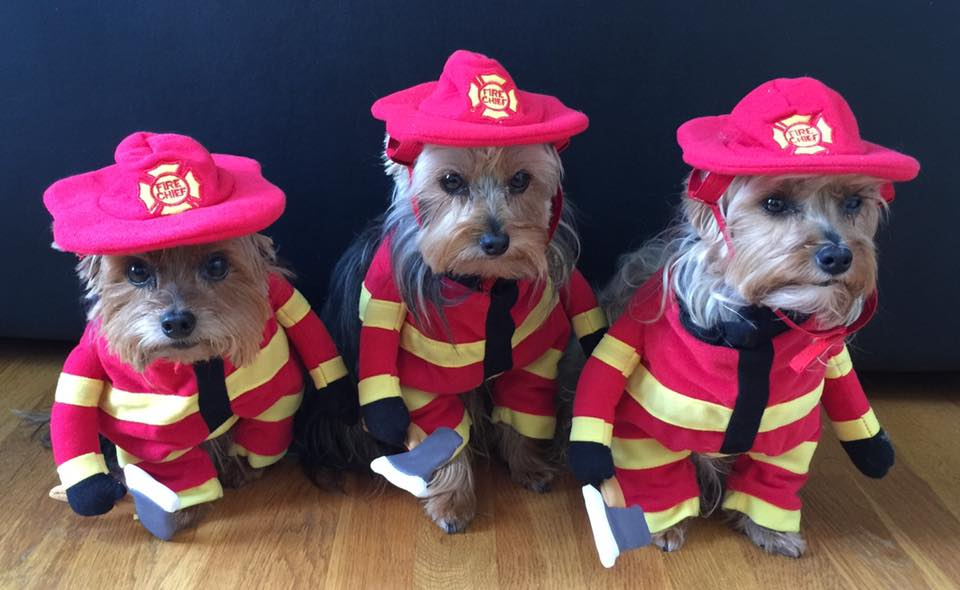 National Fire Pup Day Wishes for Whatsapp