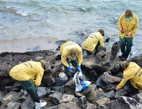 Pernambuco recolhe 1.358 toneladas de óleo em oito dias