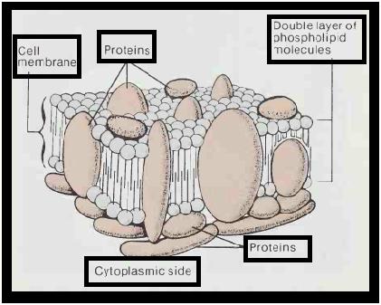 ashley daniels pantyhose