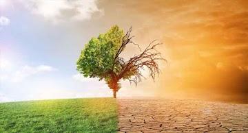 A vida na Terra está sobre sérios riscos de extinção