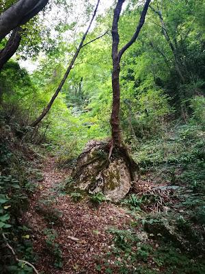 biodiversità vigna prosecco