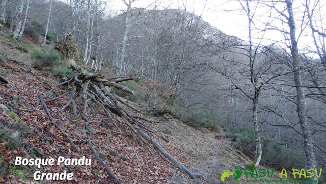 Bosque Pandu Grande