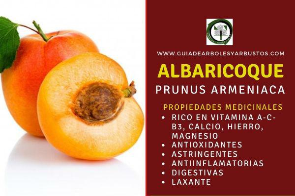 El albaricoque tiene propiedades medicinales por su contenido de vitamina A, calcio y hierro. Mejora la vista, protege la membrana