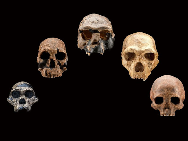 Climate change likely drove early human species to extinction, modelling study suggests