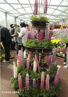 Lupins, flower show - Kyoto Botanical Gardens, Japan