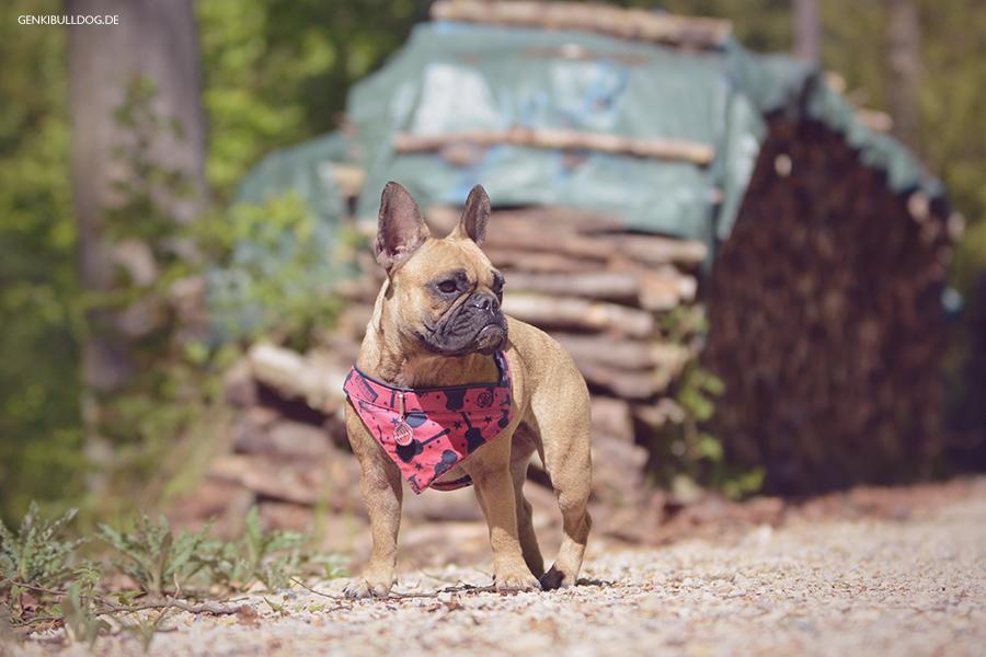 Hundeblog Genki Bulldog - Spaziergang auf dem Wendenkopf