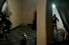 Grupo armado invade casa, mata jovem e filma ação em Senador Canedo