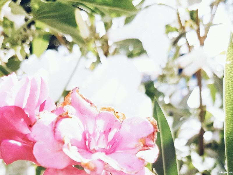 esse é mês do meu aniversário, também é o tempo da primavera, que por sinal me deixa muito inspirada. cada foto do 06on06 desse mês foi tirada aleatoriamente