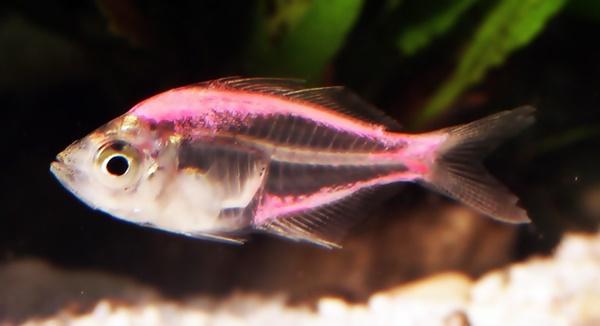 T21D22 Bermain dengan Glassfish