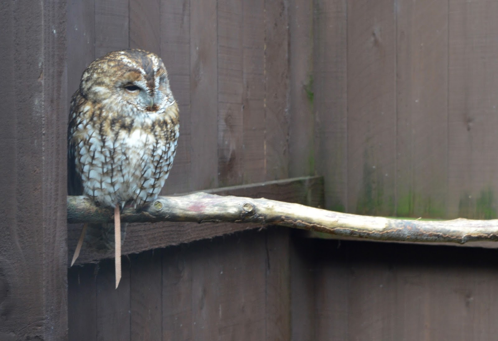 Visiting Angry Birds Activity Park at Lightwater Valley, North Yorkshire - Birds of Prey Centre