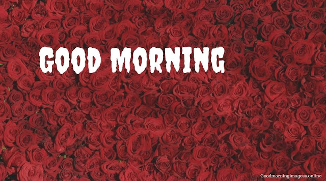 Good Morning Images In Roses 10