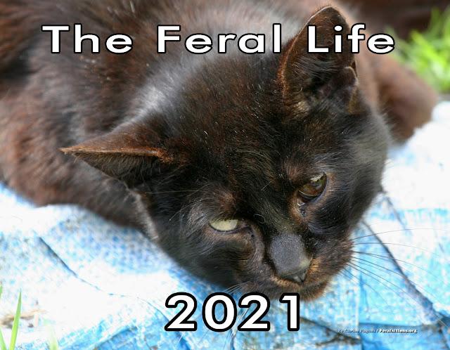 Feral Life 2021 Cat Photo Calendar