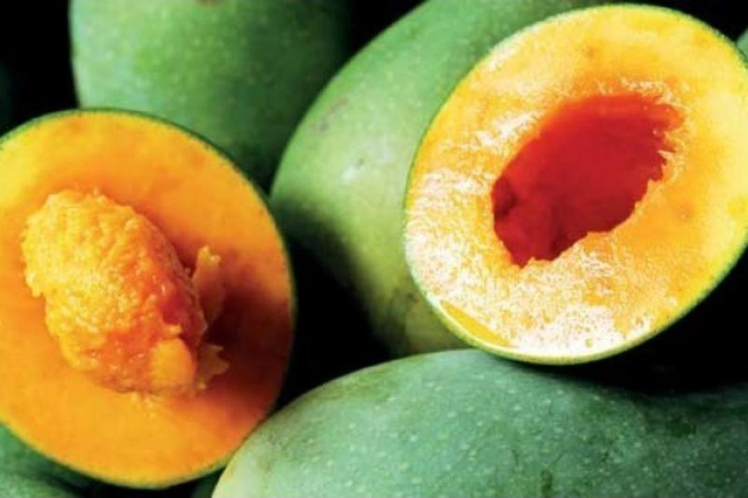 Obral! bibit mangga alpukat bibit tanaman buah buahan bibit buah benih buah buahan bibit pohon buah buahan Kota Bekasi #bibit buah genjah termurah