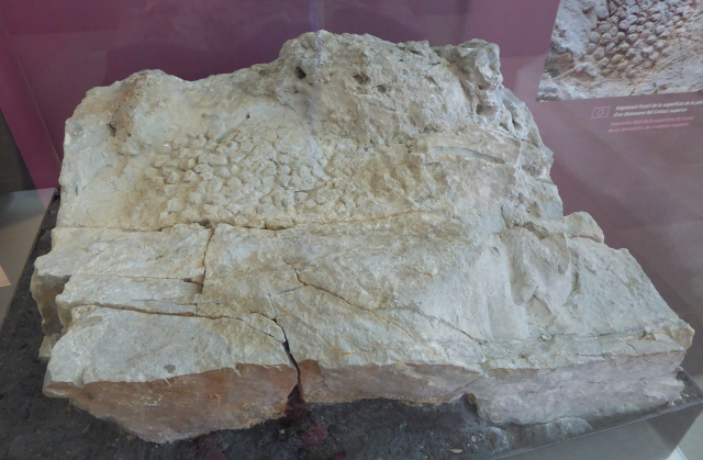 Pell fòssil
