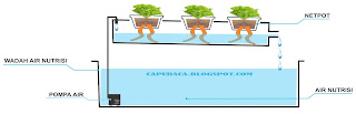 sistem dft hidroponik