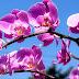 زهرة الأوركيد: الخصائص والتاريخ ونصائح عند الزراعة